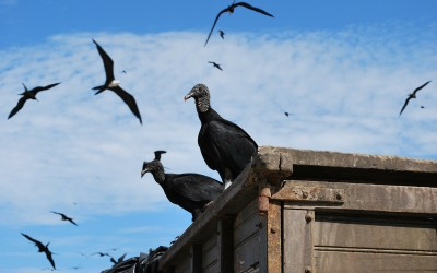 Like vultures circling a wounded animal: when good MLM companies go bad (and good network marketers get sleazy)